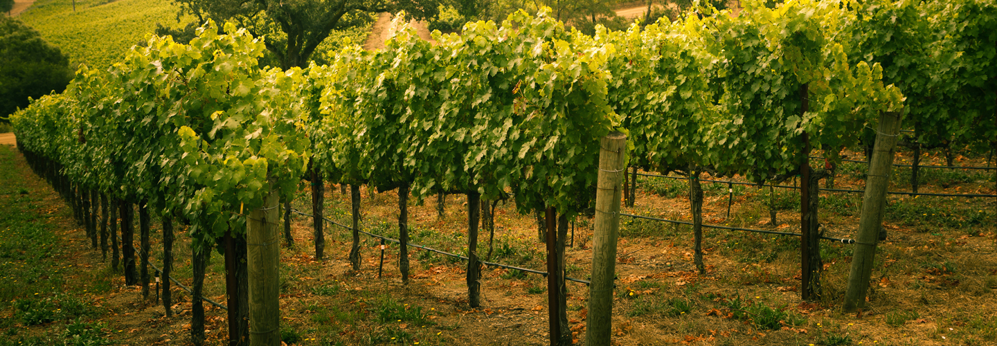 Image Wine Country